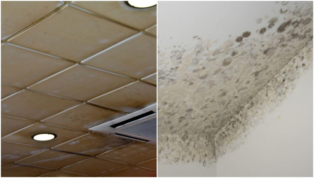 Limpieza de techos