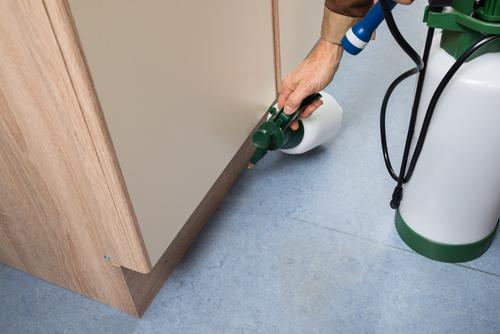 cómo limpiar de pulgas tu casa