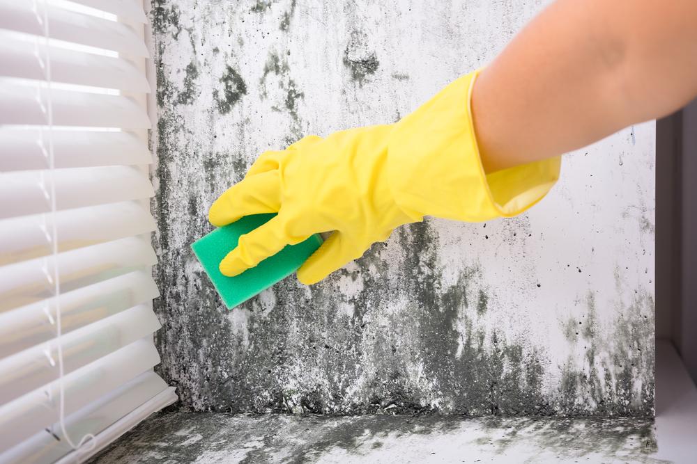 cómo limpiar moho