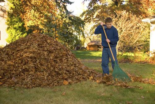 Cómo limpiar el jardín