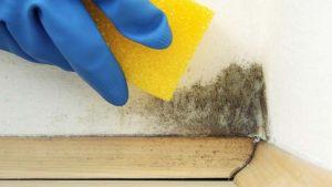 Cómo limpiar moho en paredes