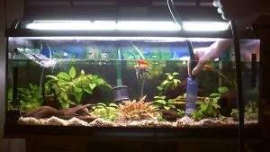Limpiar fondo acuario