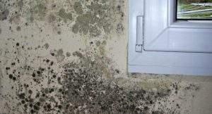 Cómo limpiar el moho