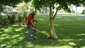 Limpieza jardines