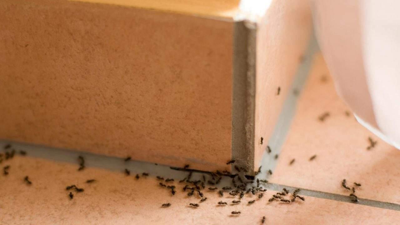 Mantener las hormigas lejos de su casa