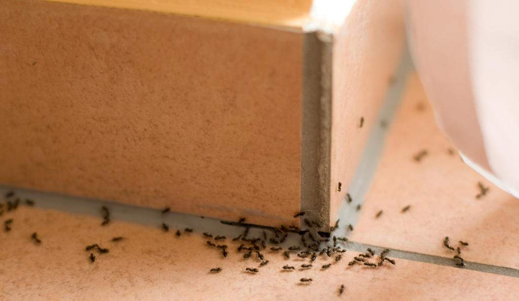 Cómo matar a las hormigas