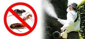 cómo exterminar plagas