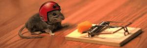 Cómo matar ratas